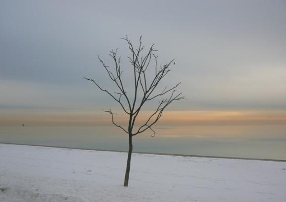 Tim Burtonesque Tree