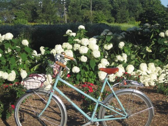 Beginning of summer, blooming flowers in Grant Park