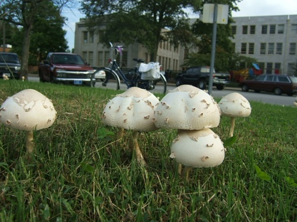 Bike and mushrooms are totally to scale.