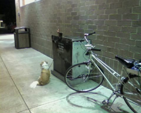 A newspaper machine. Hey, if it's secure enough for your dog. . .