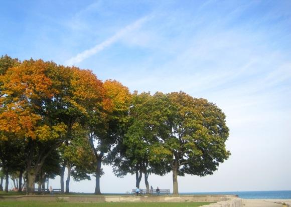 Trees and Lake Michigan