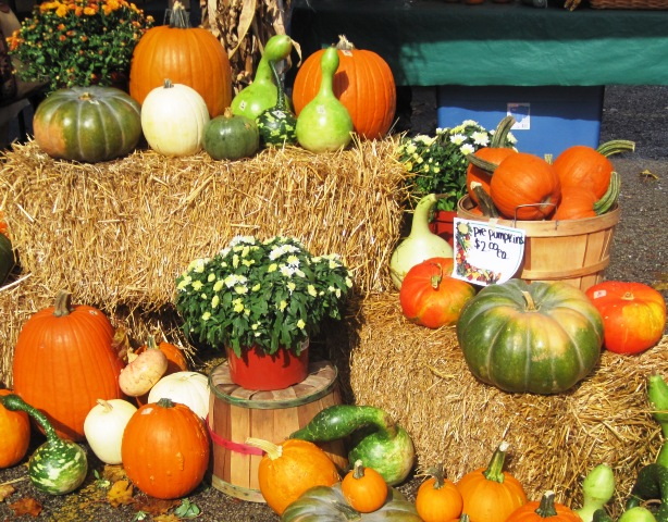 Pumpkins at the Farmer's Market