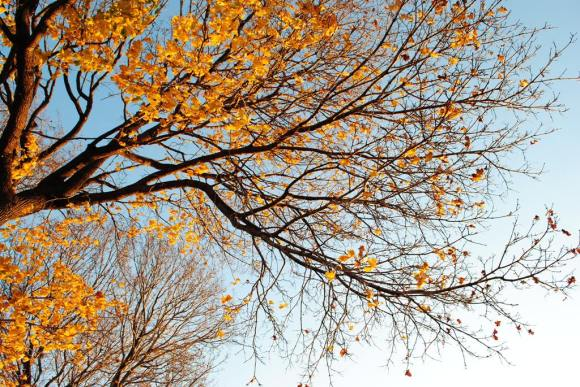 11-11 leaves