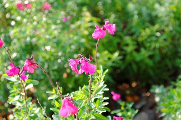 11-14 flower