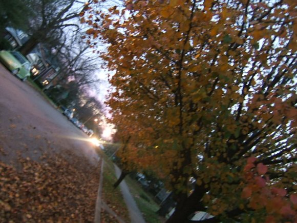 last of the leaves