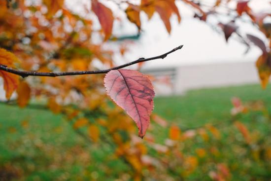 fall_bike-1
