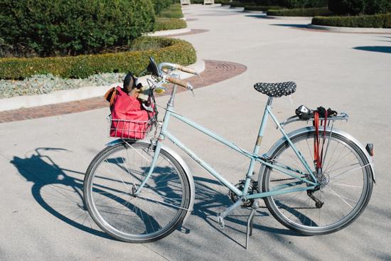 fall_bike-6-2